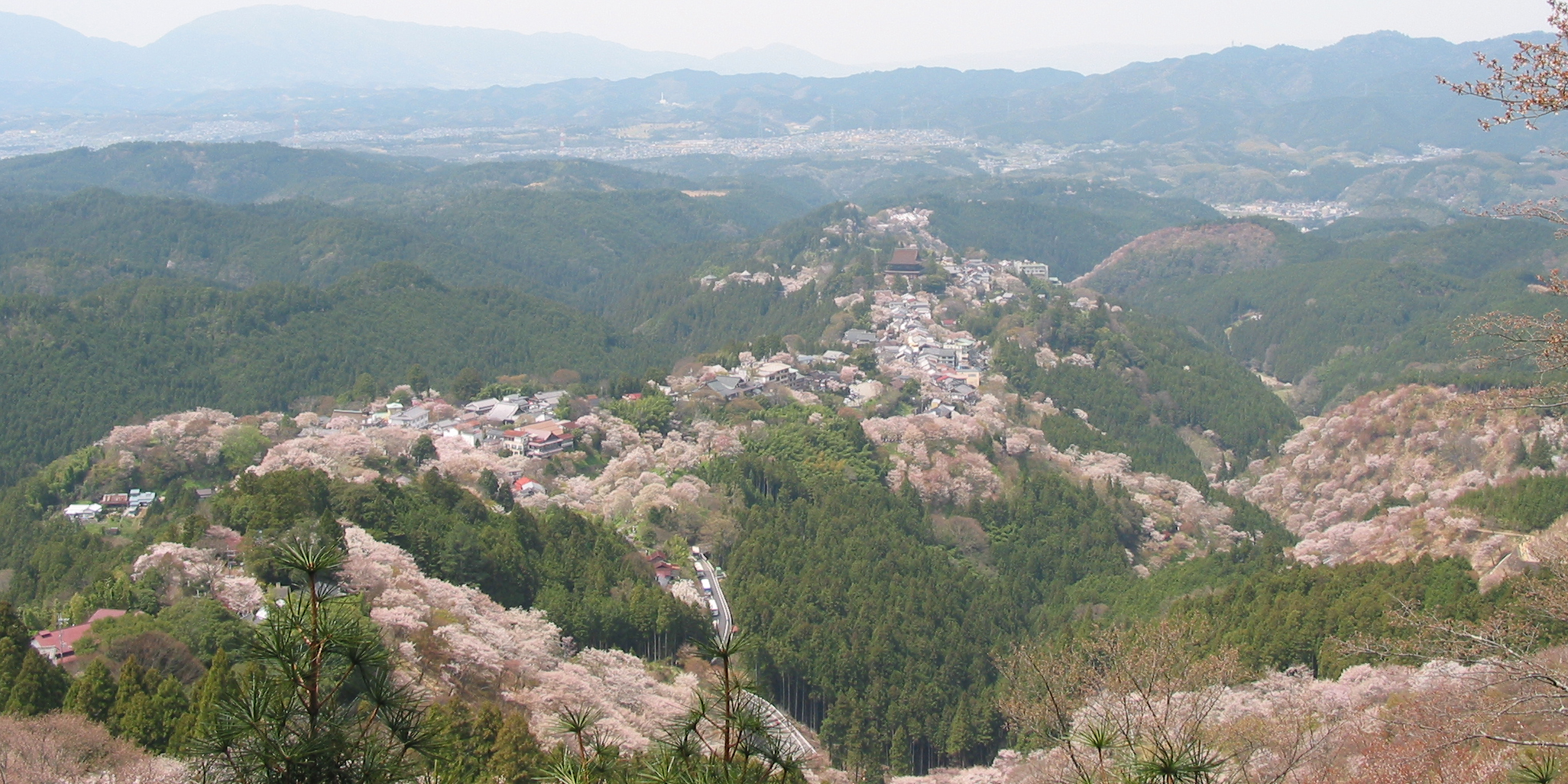 Cherry blossoms at Yoshinoyama